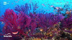 I Punti di immersione di Pantelleria
